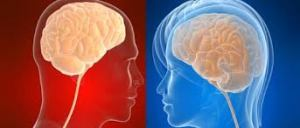 cerebro masc femenino
