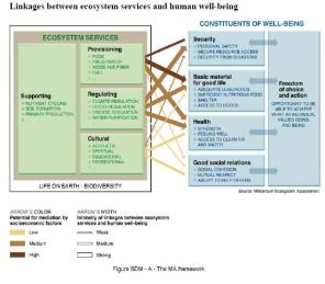 Links btw Ecosystems and Human Well Being